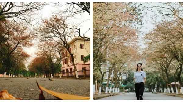 PHÁT SỐT với con đường ngập tràn lá vàng, lá đỏ lãng mạn như phim Hàn ngay gần Bắc Giang