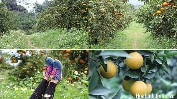 Đừng check-in mùa hoa nữa, tháng 12 này ghé thăm trại cam vào mùa chín rộ, đẹp quên lối về