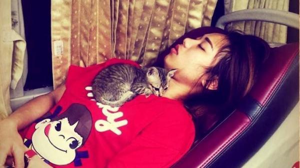 Cư dân mạng ngạc nhiên khi cô gái Hưng Yên đem được mèo lên xe ngủ ngon lành