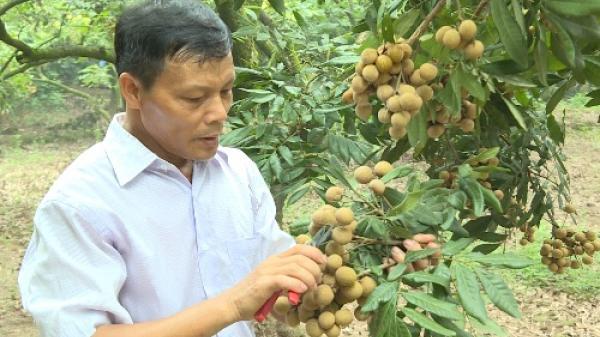 Gặp gỡ Sao Thần nông Trịnh Văn Thinh ở thành phố Hưng Yên