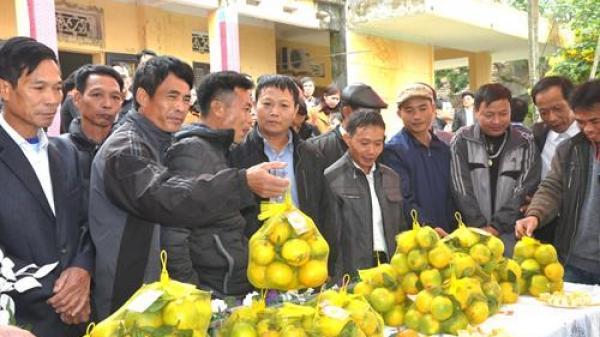 Cam Quảng Châu thành phố Hưng Yên được cấp chứng nhận nhãn hiệu tập thể