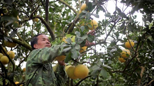 """Bị cho ý tưởng """"điên rồ"""" nhưng lão nông Hưng Yên đã tạo ra xã """"tỷ phú"""", thu nhập 200 tỷ đồng/năm nhờ vựa cây"""