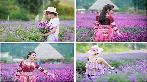 'Lịm tim' trước cánh đồng hoa oải hương tím biếc đẹp như trời Âu khiến giới trẻ mê mẩn