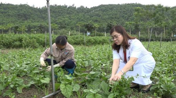 Bệnh viện Phú Thọ đầu tư 8 tỷ trồng rau, nuôi lợn phục vụ bệnh nhân