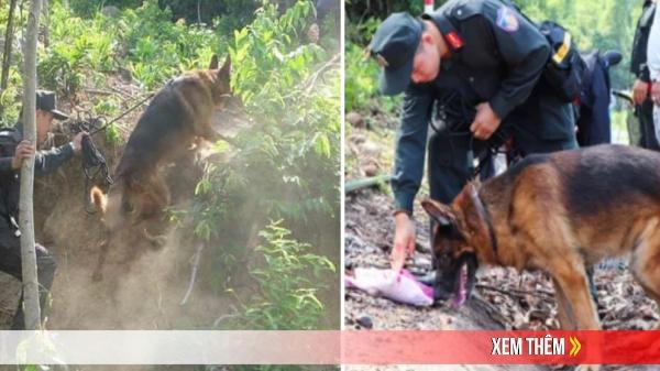 Sự thật thông tin chó nghiệp vụ hy sinh khi truy bắt phạm nhân trốn trại nguy hiểm