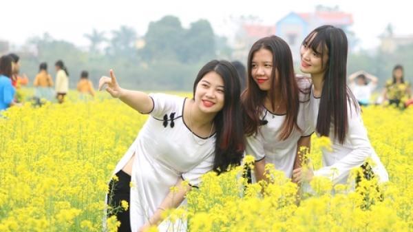 Vẻ đẹp hút hồn của vườn hoa cải vàng ươm ở Thái Bình khiến người dân nô nức đổ xô mục sở thị
