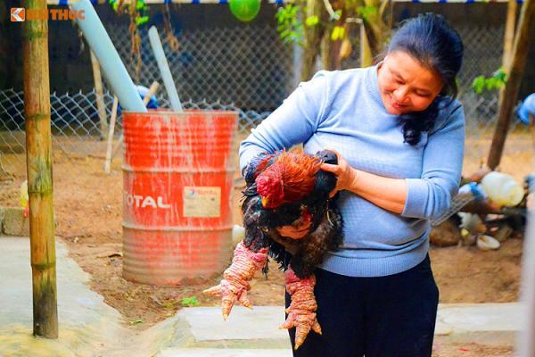 Thời điểm đó giá bán mỗi con gà lên đến 5 - 7 triệu là chuyện bình thường.